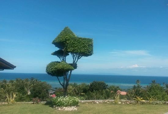 Alcoy, ฟิลิปปินส์: sculptured tree