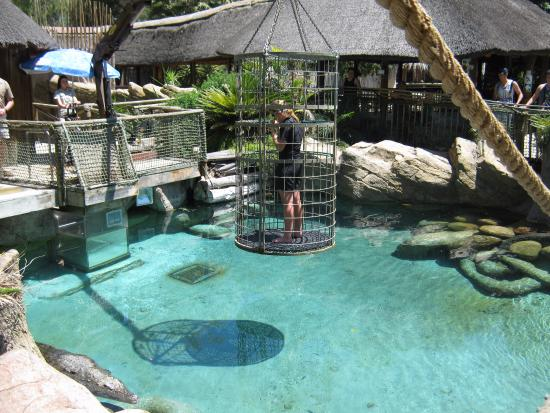 Oudtshoorn, Νότια Αφρική: Submerged in a cage with crocodiles
