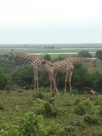 Chobe National Park, Botswana: 20160206_010101_large.jpg
