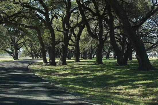 Stonewall, TX: Live oak grove and road near the Johnson family graveyard.