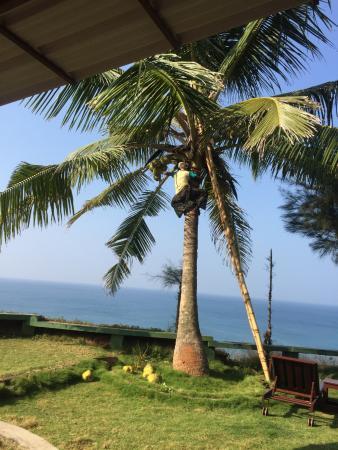 Varkala SeaShore Beach Resort: coconut harvesting during breakfast