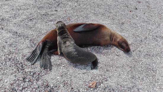 Fernandina, Ecuador: Sea Lions