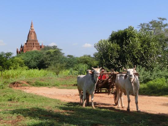 Храмы Пагана: Began View
