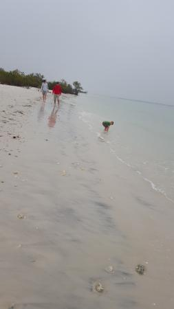 Honeymoon Island State Park: beautiful beaches