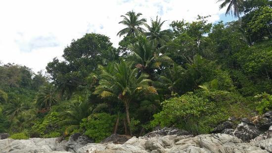 Freedom Beach: 20160205_111422_large.jpg