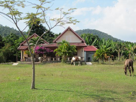 Kep, Camboja: peacfully grazing on the farm