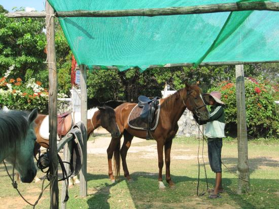Kep, Camboja: all saddled up ready to go