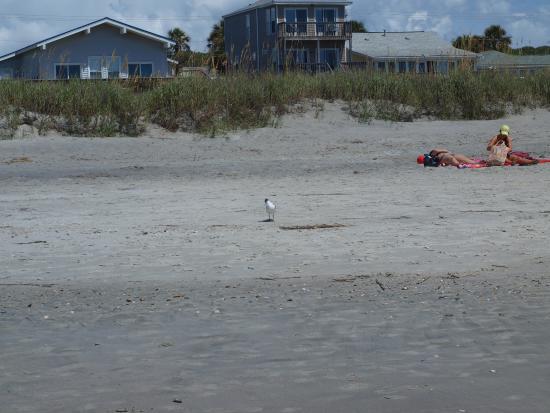 Folly Beach 6