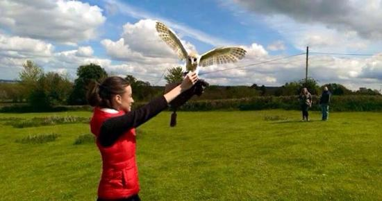 Crewkerne, UK: Sharandys bird of prey experience nearby check it out