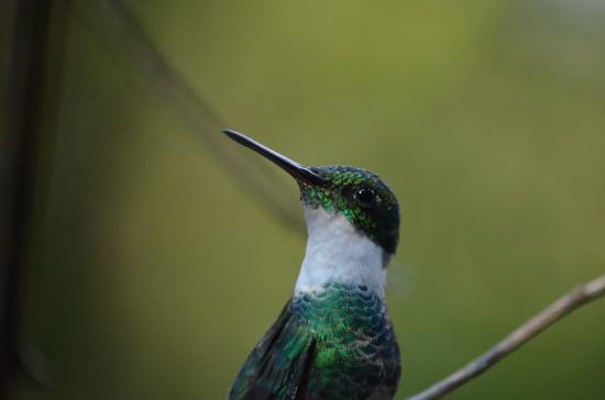 Jardin de los Picaflores: Noten el detalle de las plumas alrededor de los ojos