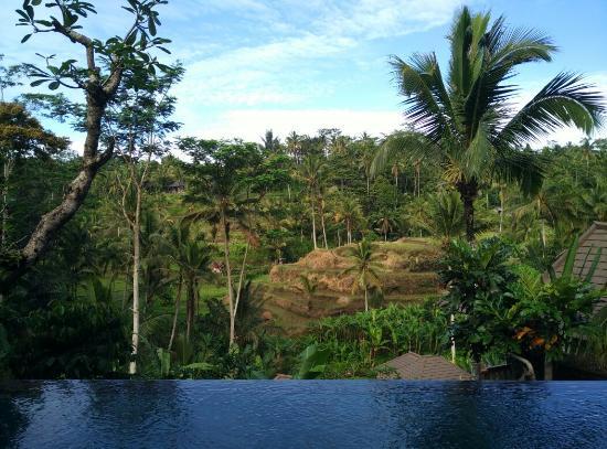 Tegalalang, Endonezya: Amazing resort