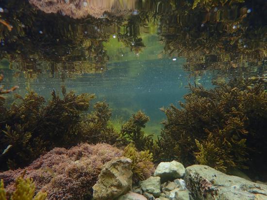 Kaikoura, Nueva Zelanda: under the sea