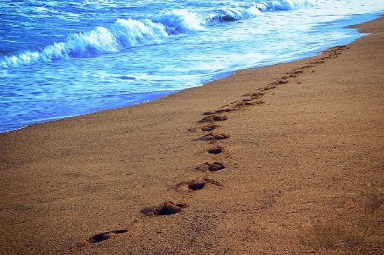 Can Majo: Barceloneta Beach