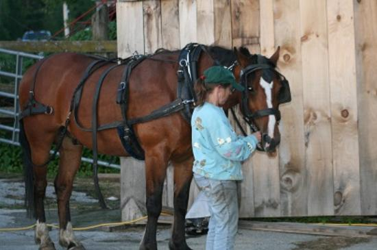 Jeffersonville, VT: April with Jerry our couples Horse