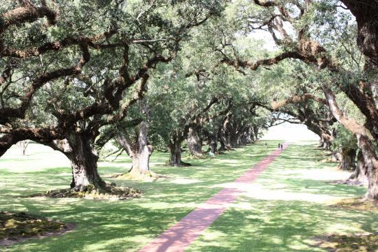 Vacherie, LA: Oak Canopy from House Deck