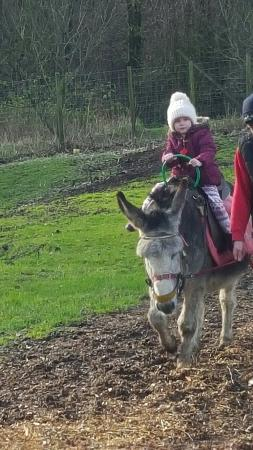 Bolton, UK: Fun day out at smithills farm
