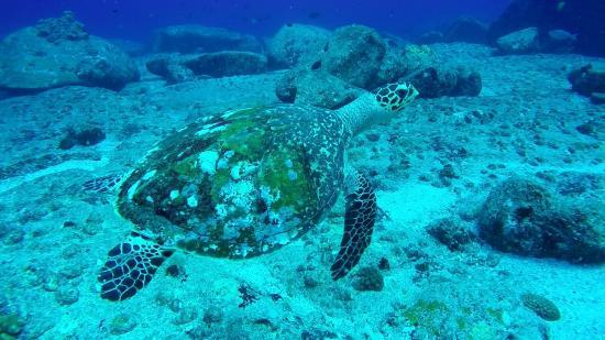 Victoria, Seychelles: Dive 5 Feb 2015