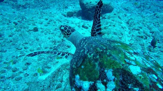 Victoria, Seychellen: Dive 5 Feb 2015