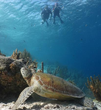 Kralendijk, بونير: Athoyo taking a picture of us, taking a picture of a sea turtle