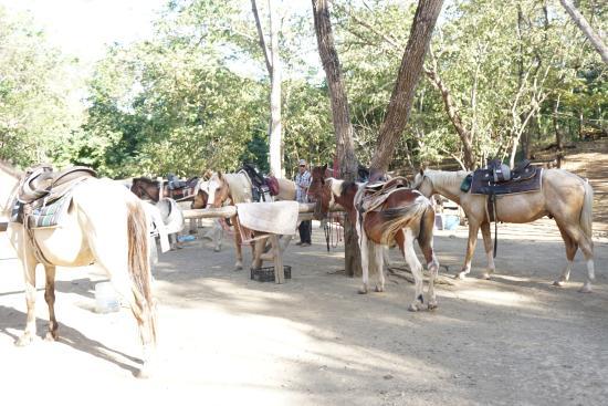Playa Ocotal, Kosta Rika: horse back riding tour