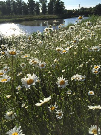 Slough, UK: Jubilee River