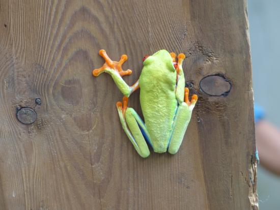 Red Frog Day Tours: Frosch am Infopoint