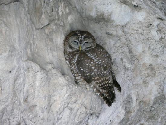 Hereford, AZ: Owl inside of cave at Coronado National Memorial