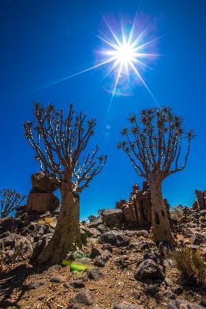 Windhoek, Namibia: Paesaggio spettacolare Quiva trees