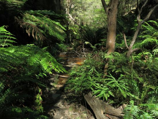 Lithgow, Australien: Amazing microclimate areas