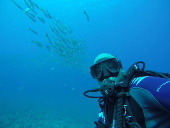 Playa Hermosa, Costa Rica: Underwater at Monkey Island
