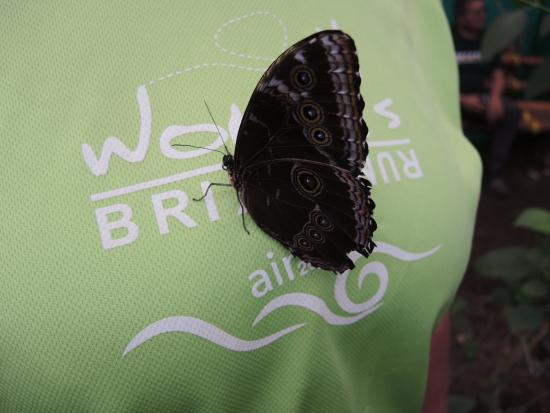 Nathaly Butterfly Garden: Spannweite über 14 cm