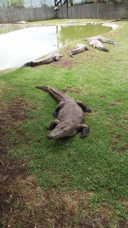 Fourways, Sudáfrica: crocs everywhere!!!