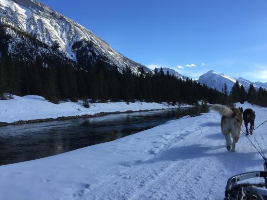 Snowy Owl Sled Dog Tours: Snowy Owl Sled Dog Tours