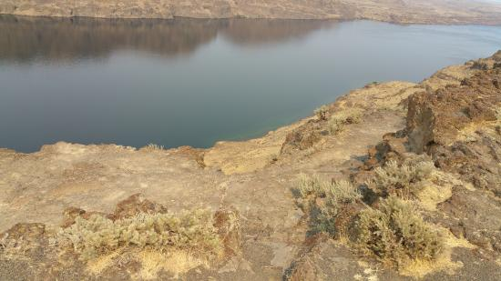 just breath taking and elegant picture of ginkgo petrified forest rh tripadvisor com