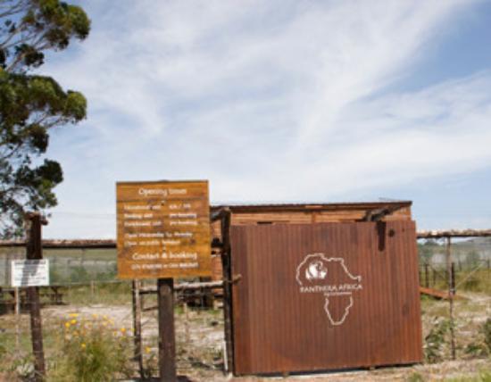 Stanford, Sudáfrica: Panthera