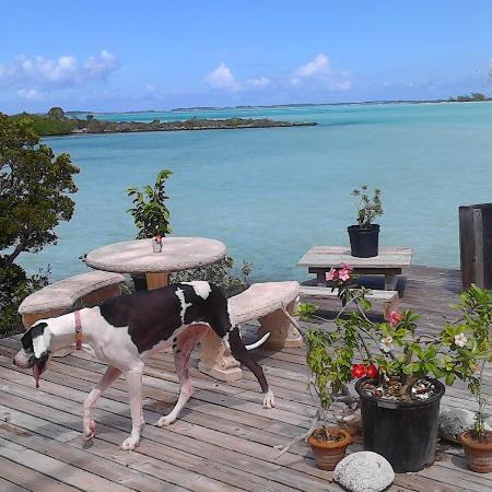 George Town, Great Exuma: Even the pets love the outdoors