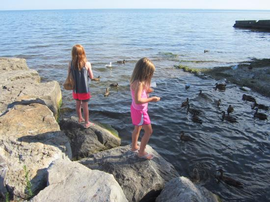 Oakville, Canada: Here are my grandchildren feeding the Ducks at Gairloch by the little stream that is aT THE wEST