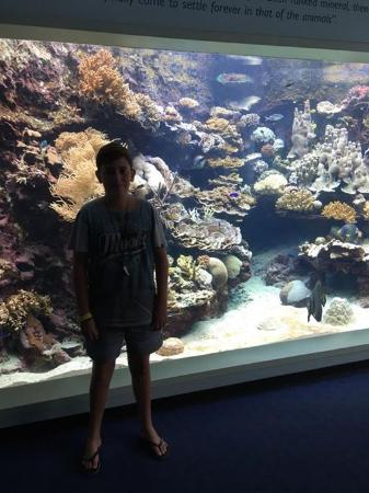 ‪‪Aquarium des Lagons Nouvelle Caledonie‬: My son in front of the big tank‬