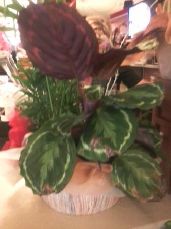 splendida pianta sul banco