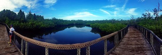 Palmetto, FL: Emerson Point trails