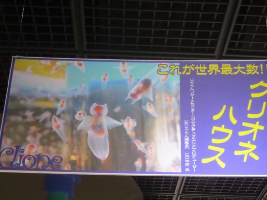 Monbetsu, Japón: クリオネハウスの看板