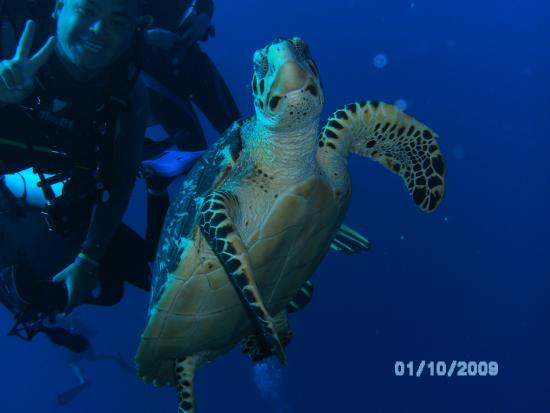 West End, Honduras: Mau, dive master on a great dive