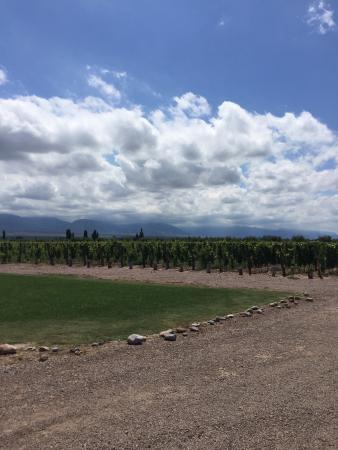 Luján de Cuyo, Argentina: Vineyard views.