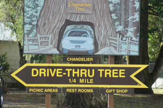 The middle part of the tree - Picture of Chandelier Drive-Through ...
