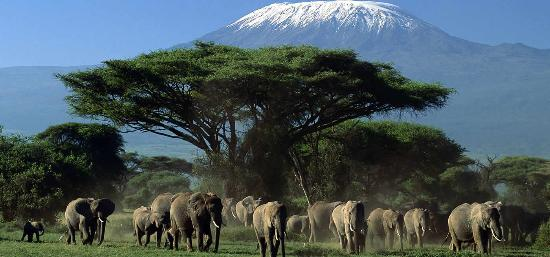 Kibo Safari Camp: Elephants in the Amboseli