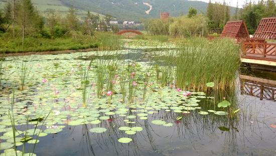 Dalian West Forest Park: lotus flowers