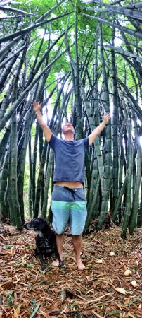 Maleny, Australia: bamboo forest