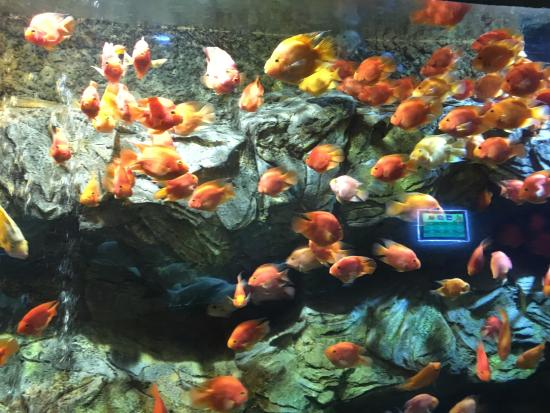 Phu Quoc Adası, Vietnam: Aquarium at Vin Pearl Land Phu Quoc