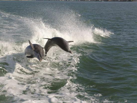 Hilton Naples: Dolphins Off the Coast of Naples