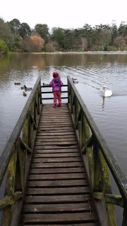 Newtownards, UK: Feeding / viewing Jetty Mount Stewart lake